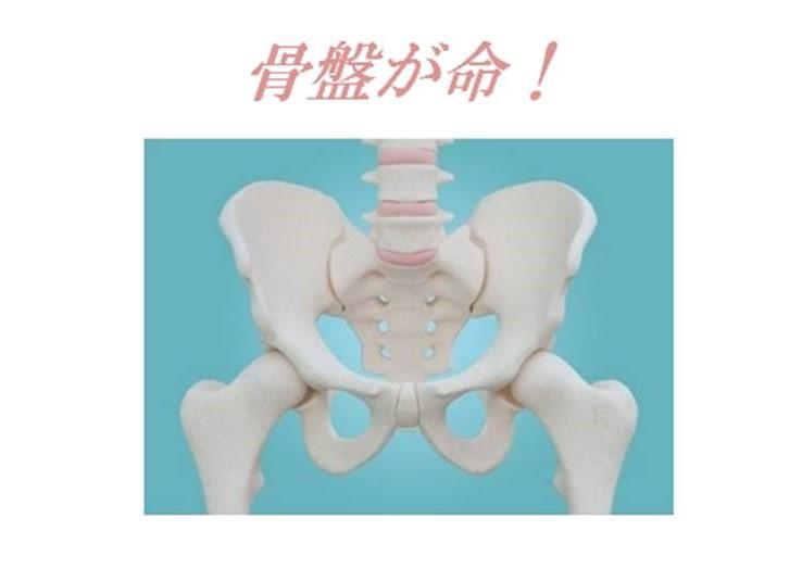 骨盤を知り、整える
